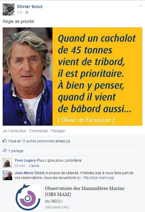 cachalot facebookien by Olivier